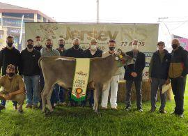 Animais de Santa Catarina foram destaque na 44ª. Expointer